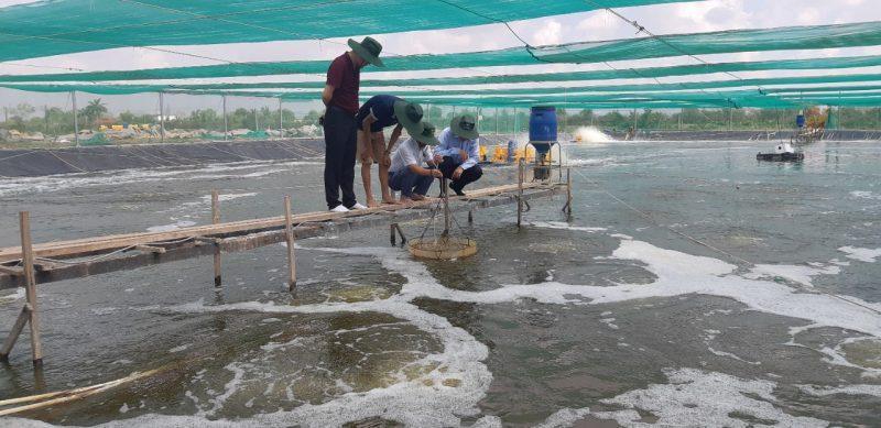 Ứng dụng công nghệ Biofloc trong nuôi tôm